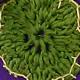 Fiore Verde Uncinetto